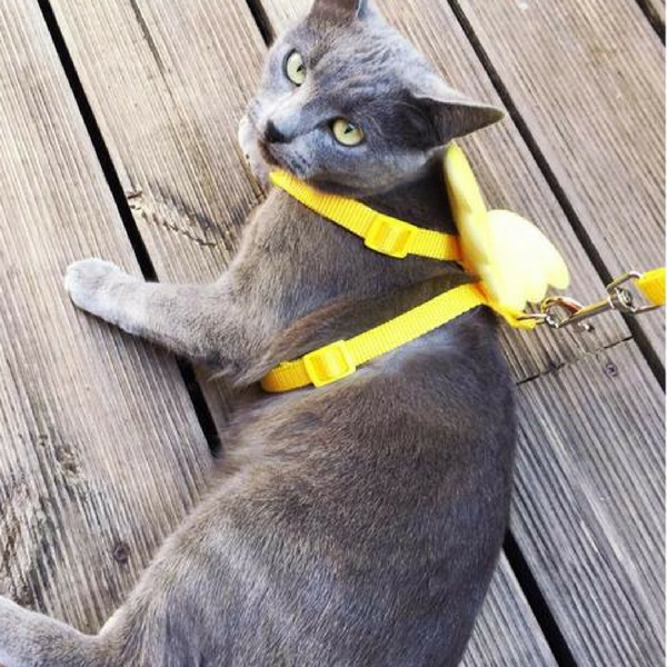 Angel Cat Pet Leash Dog Yellow Wings