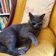 Fashion Pet Sunglasses Grey Cat Lying Down