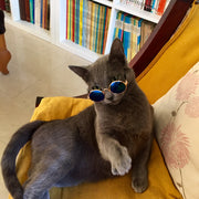 Fashion Pet Sunglasses Grey Cat