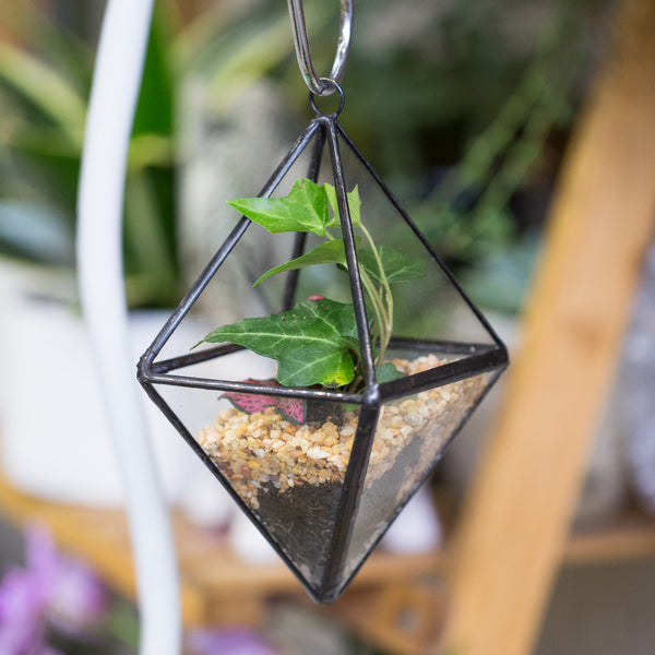 Air Plants Bonsai Flower Pot Hanging Geometric Clear GlassTerrarium Succulent Fern Moss Garden Succulent Plant display