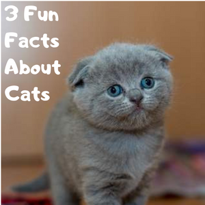 3 Fun Facts About Cats