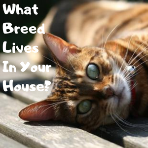What Breed of Cat Lives In Your House?