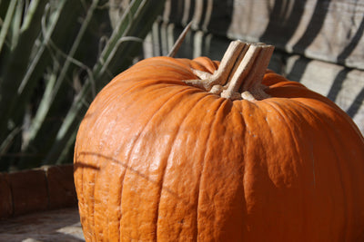 DIY Pumpkin Enzyme Facial