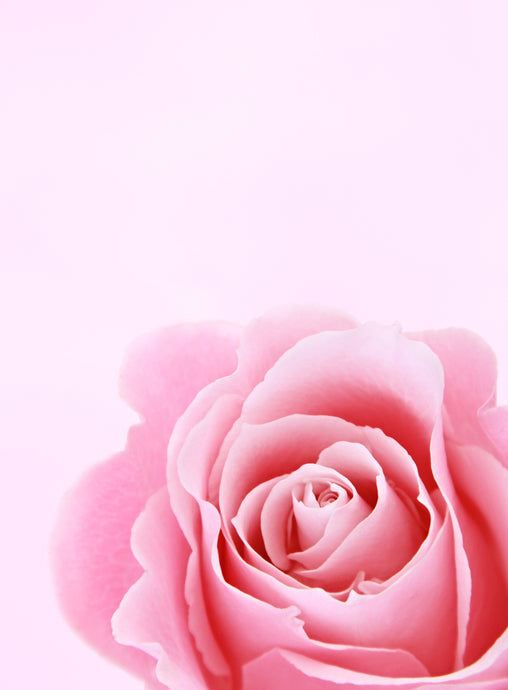 What Are the Benefits of Rose in Skin Care?