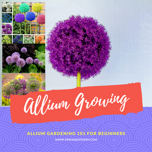 Bon Allium Gardening 101 For Beginners