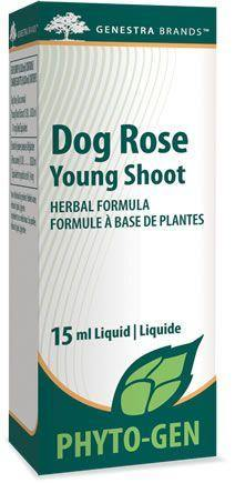 Dog Rose Young Shoot - Holistic United