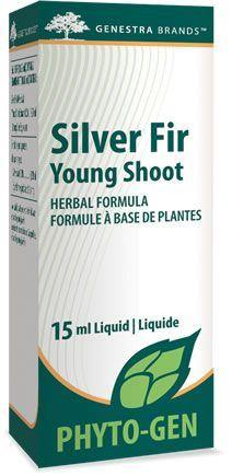 Silver Fir Young Shoot - Holistic United