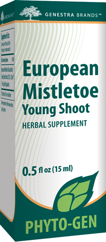 European Mistletoe Young Shoot - Holistic United