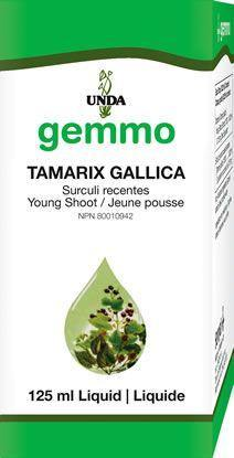 Tamarix gallica 125 ml - Holistic United