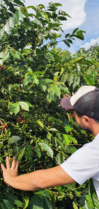 NEW | LIMITED EDITION |  COLOMBIA JAVA NATURAL FINCA LA JULIA