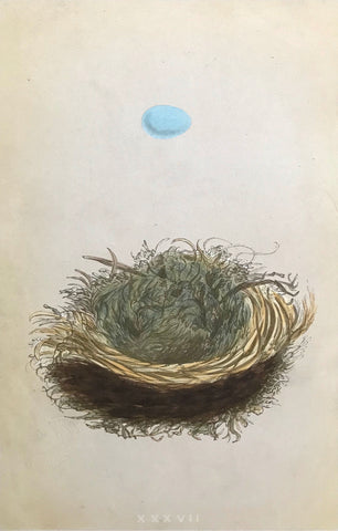 Professionally Mounted Original Antique (c1875) Chromolithograph - Nest and Egg of a Pied Flycatcher