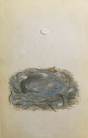 Professionally Mounted Original Antique (c1875) Chromolithograph - Nest and Egg of a Marsh Tit