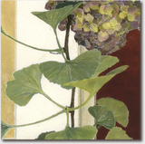 Cressida Campbell Card Pack - Petals and Leaves