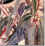 Cressida Campbell Card Pack - Nature
