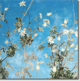 Cressida Campbell Card Pack - Blue Sky and Clouds