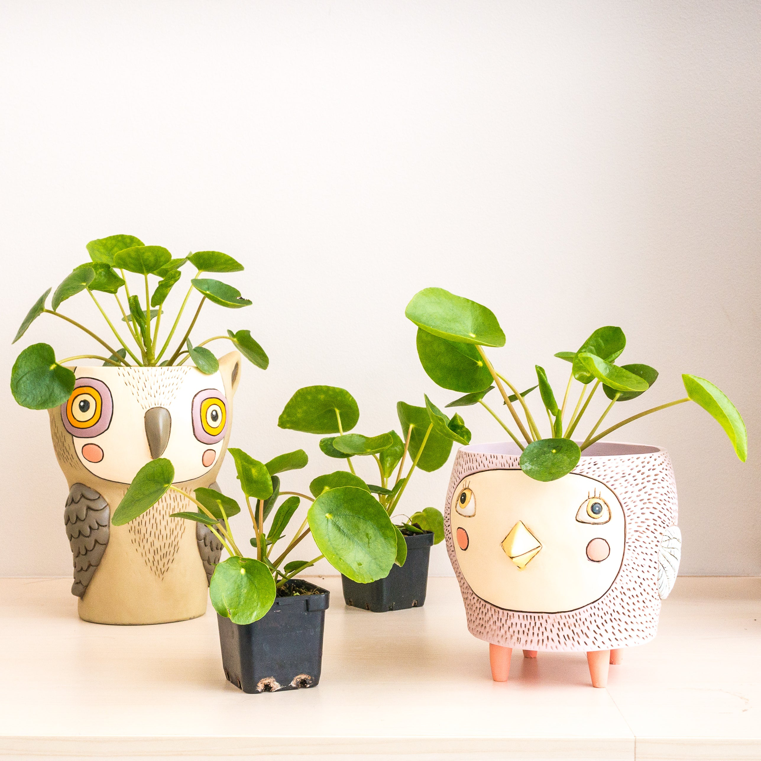 Owl Pot [product-vendor]- Pilea Place House Plant Store Melbourne Sydney Australia Canberra Brisbane Victoria New South Wales