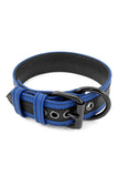 Blue leather racer stripe pup collar