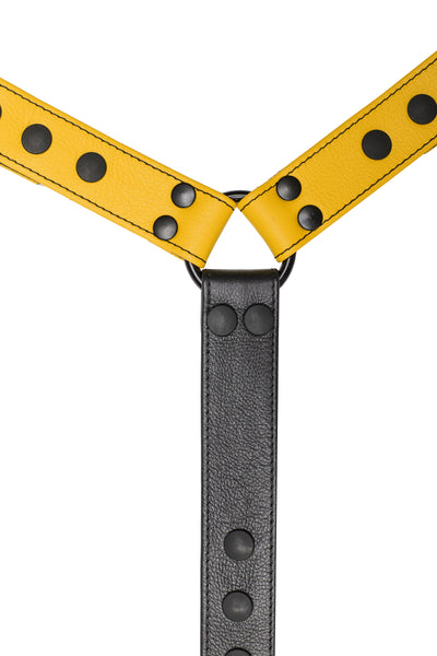Yellow leather bulldog harness connector with black hardware. Close up.