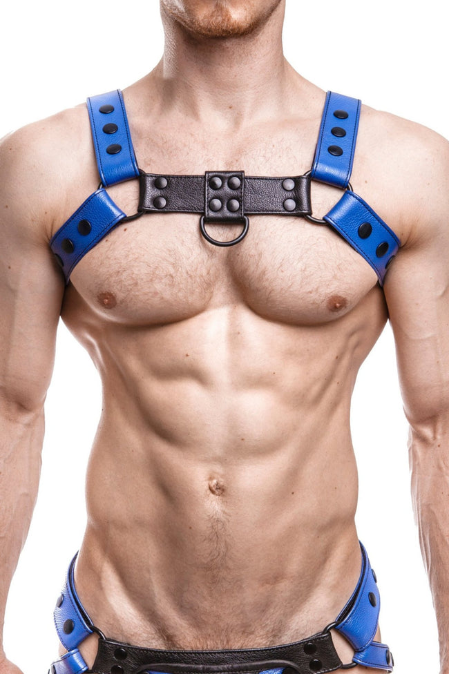 Model wearing a blue leather bulldog harness with black hardware. Front.