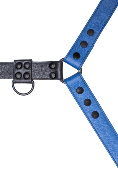 Blue leather bulldog harness with black hardware. Close up.