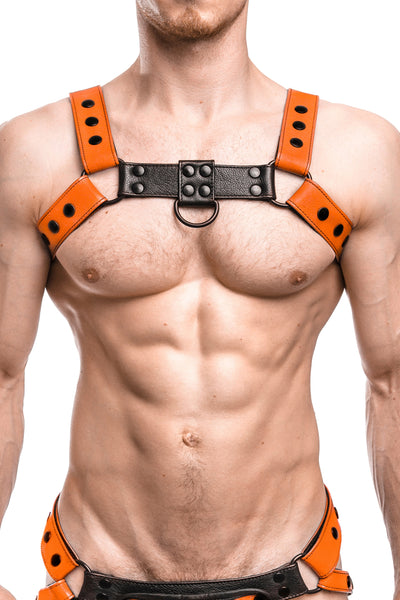 Model wearing an orange leather bulldog harness with black hardware. Front.