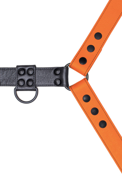 Orange leather bulldog harness with black hardware. Close up.