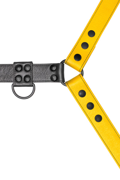 Yellow leather bulldog harness with black hardware. Close up.
