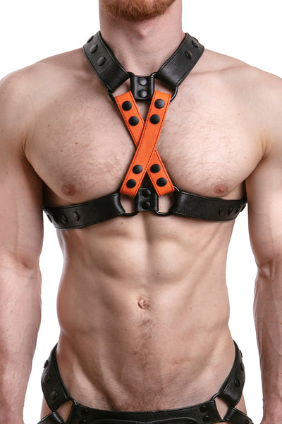 UNIVERSAL X HARNESS - Colour