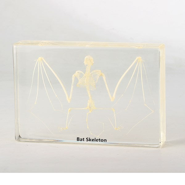 Resin specimen - Bat Skeleton