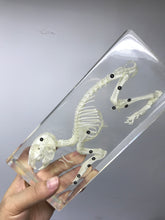 Resin specimen - Rabbit Skeleton
