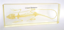 Resin specimen - Lizard Skeleton