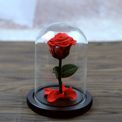 Fresh Preserved Rosiness Flush Rose - JSEJ Styles