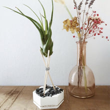 Nouveau: Inteli Air Plant (CAM)