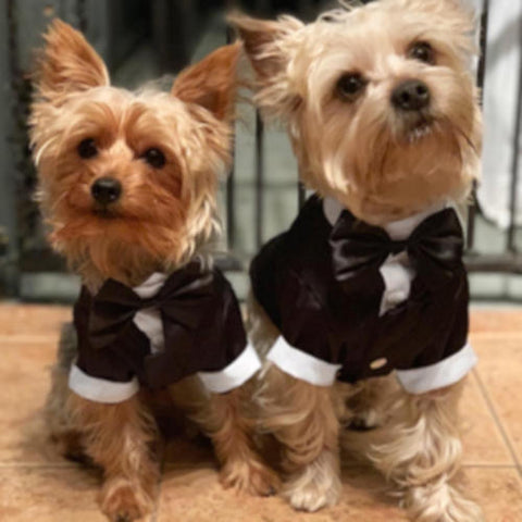 Yorkie Wedding Costume