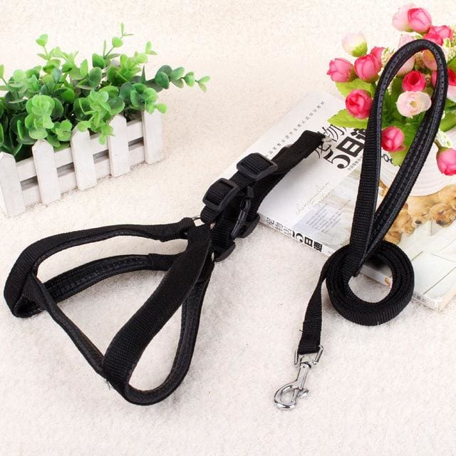 Pet Harness Leash For Medium & Large Dog - Black / 15mm