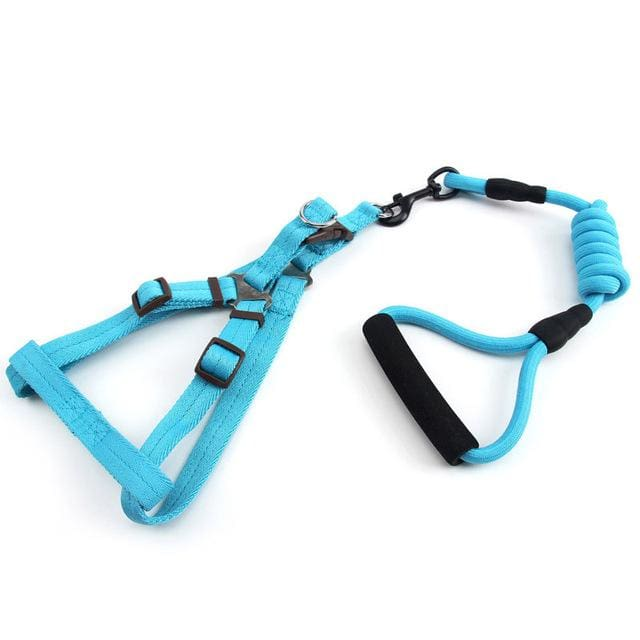 Pet Harness + Leash For Small Dog - Blue / S - Dog Leads