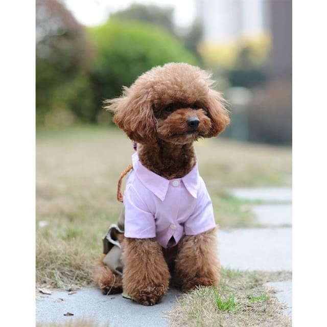 Small Dog Cloth - Jumpsuit Blue / Pink - Dog Clothing
