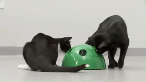 Interactive Cat Toy - Mouse and Feather included