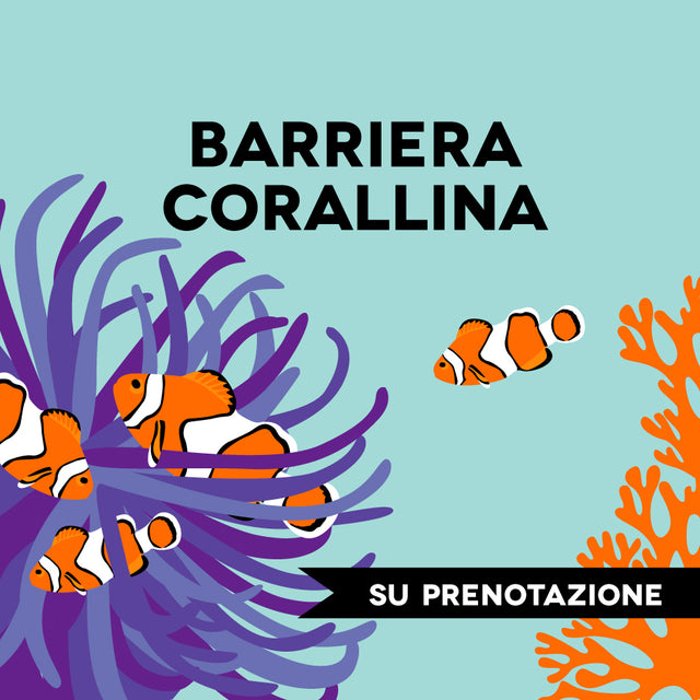 LOVE BARRIERA CORALLINA