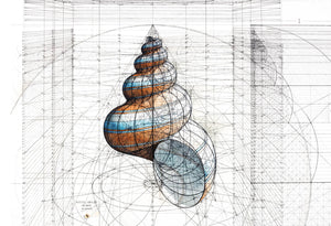 Golden Ratio Print - Golden Shell