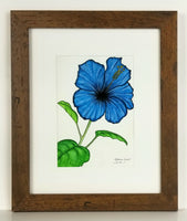 blue flower art, pen & ink, watercolor, framed original art