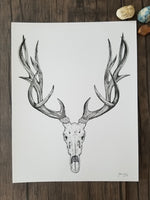 deer skull art, pen & ink deer skull, black and white art, B&W, charcoal art, art print, giclee print