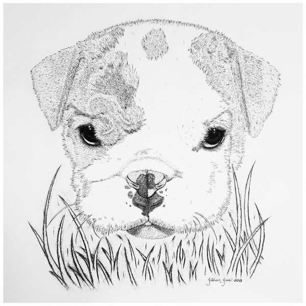 pet portrait, french bulldog art, commissioned portrait