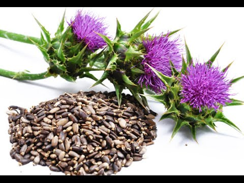 Milk Thistle seed oil virgin organic