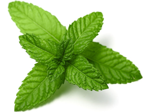 PRE ORDER Peppermint essential oil