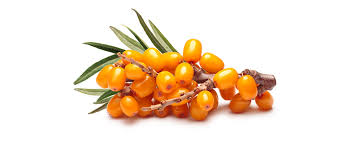 Sea Buckthorn face cream base - Seaberry face cream base - Lux Natures Soaps & Skincare