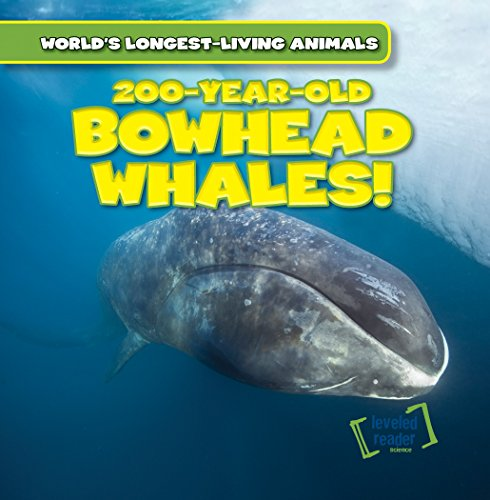 200-Year-Old Bowhead Whales! (World's Longest-Living Animals)