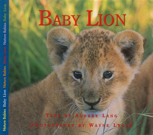 Baby Lion (Nature Babies)