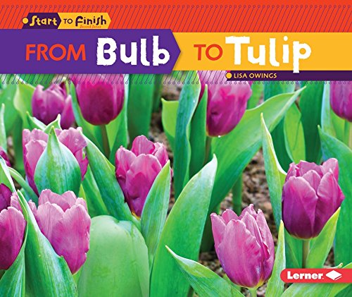 From Bulb to Tulip (Start to Finish, Second Series)