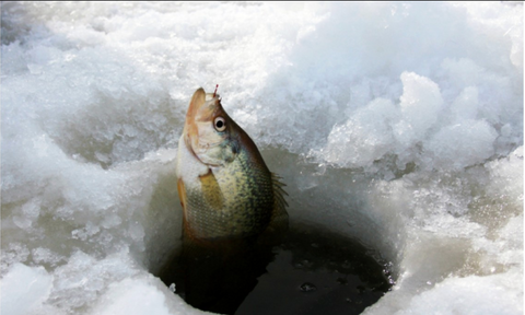 Why the GoFish Cam Is an Invaluable Tool for Ice Fishing